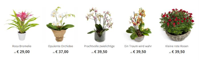Günstige Hauspflanzen bei Euroflorist