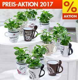 Baldur Garten Preis Aktion